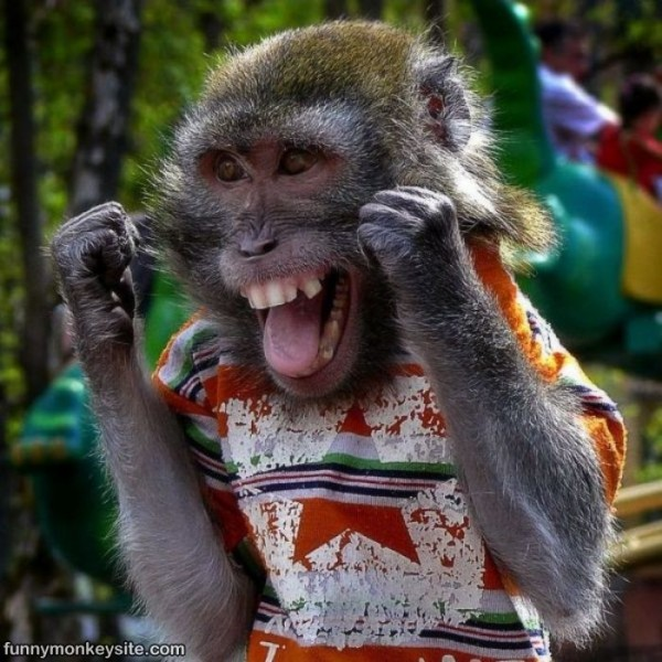 Happy_Monkey