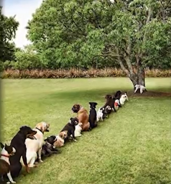 dogColon