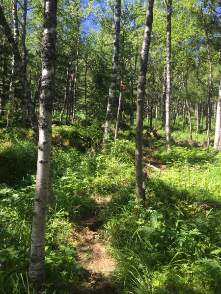 Taka mežā.
