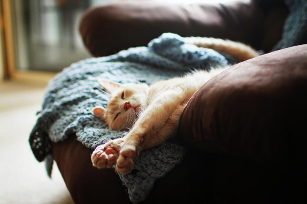 relaxing-cat-images-by-sara-lynn-paige