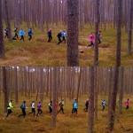 Tesiens pa mežu