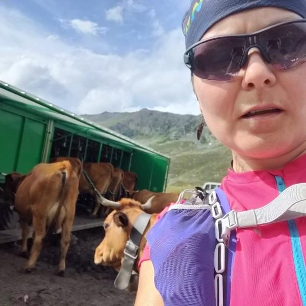 Selfijs ar visnotaļ vienaldzīgām govīm