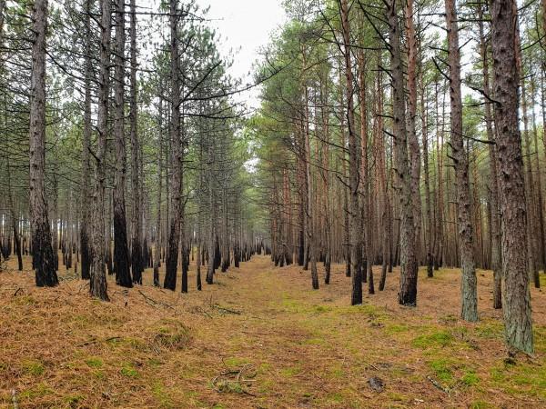 Degušais mežs